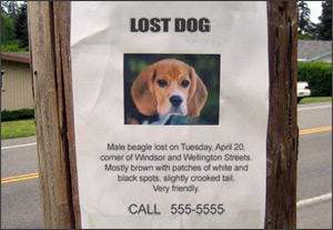 Every Missing Pet Poster Tells Story >> Tips For Advertising A Lost Pet