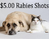 Low-Cost Rabies Vaccination Clinic