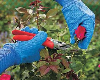 The Why, When, and How of Pruning Your Ornamental Shrubs