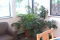 Improving Indoor Air Quality with Household Plants