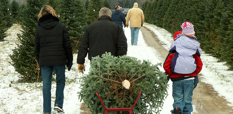 Plan a Family Outing for a Real NC Christmas Tree!