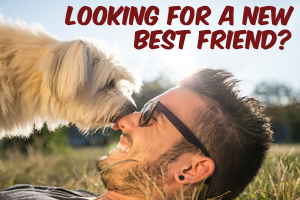 Searching for a New Best Friend . . . Look Online