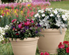 Fall Container Gardening Seminar